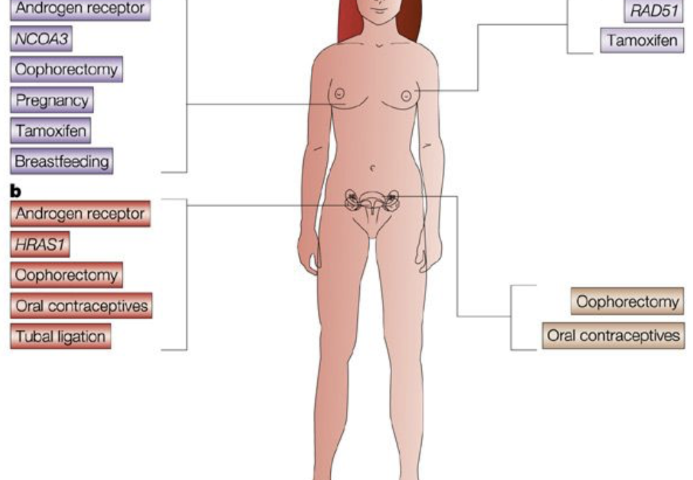 BRCA1 Hereditary Breast and Ovarian Cancer Syndrome