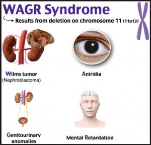 WAGR Complex