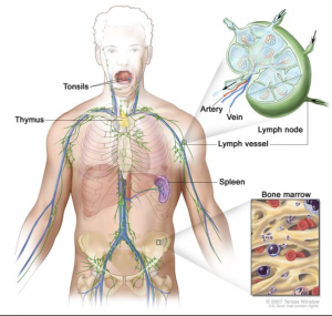 chronic granulomatous disease